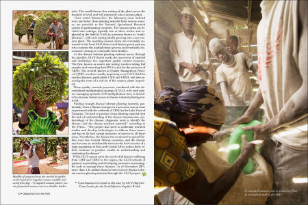 """Dispatches from the Field"" pages 10 and 11. Photography, text and design for Great Lakes Cassava Initiative."