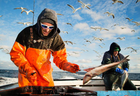 Commercial ground fishermen clean 650 lbs of haddock, pollock, cod and cusk on the way back to port in the Gulf of Maine.