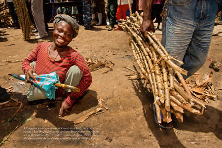 """Dispatches from the Field"" pages 30 and 31. Photography, text and design for Great Lakes Cassava Initiative."