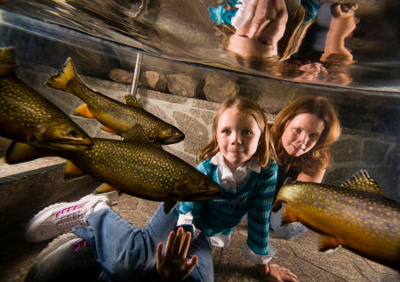 A daughter and mother look at brook trout in the pond at LL Bean in Freeport. Shot for Down East magazine.