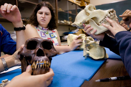 Students examine various skulls during a summer session anthropology class at McGill University in Montreal. (Shot for US News & World Report Best Colleges Guide)