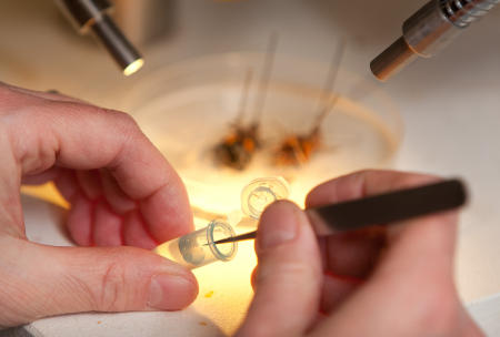 A Bowdoin College student works with insects during an entomology lab at the Brunswick, Maine college.  (Shot for US News & World Report Best Colleges Guide)