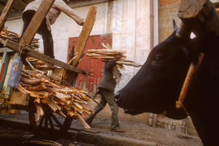 Wood, the main source for heat and cooking, is unloaded in Antsirabe, Madagascar.